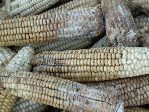 7-Aflatoxin-Contaminated-Maize–Kenya-2004